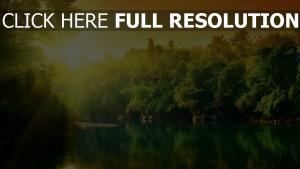 fluss bäume sonne strahlen sommer harmonie