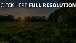 wiese gras sommer sonne strahlen bäume