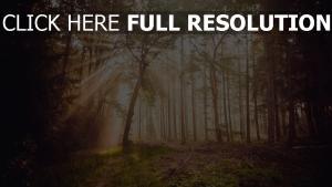 wald bäume nebel strahlen sonne