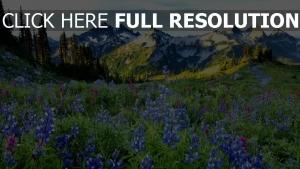 gebirge wiese frühling blühen alpen schön