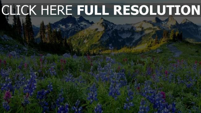 hd hintergrundbilder gebirge wiese frühling blühen alpen schön
