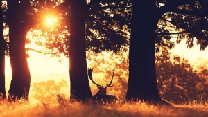 bäume hirsch reis schlaf silnouete
