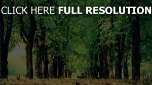 natur gehweg bäume park erde laub