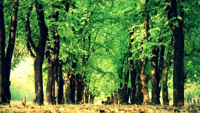 hd hintergrundbilder natur gehweg bäume park erde laub