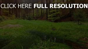wiese wald bäume gras sumpf