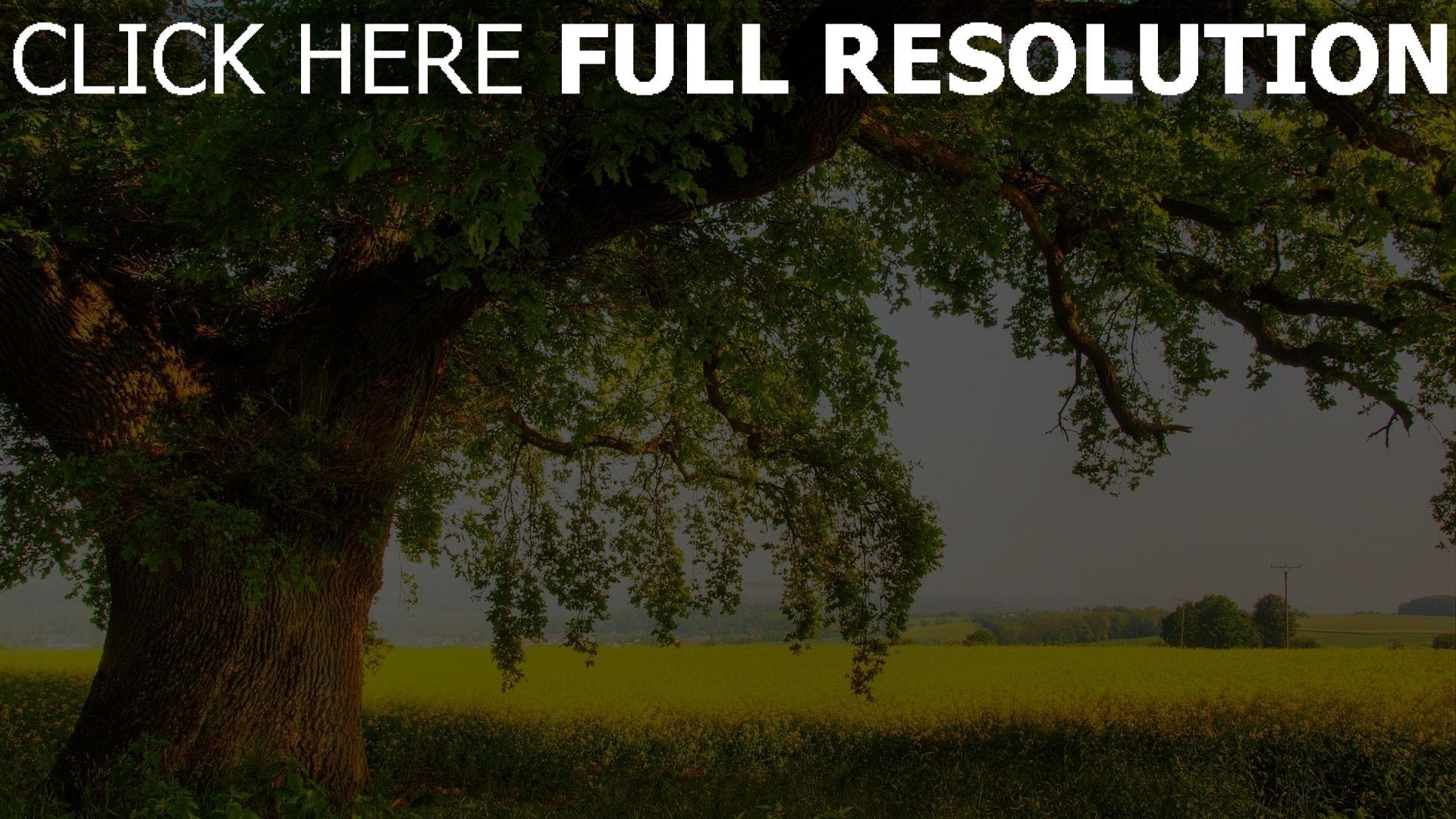 Baum Definition