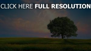 wiese ebene blauer himmel sommer einsamer baum