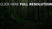 waldweg gebüsch bäume gras