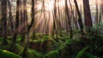 kiefernwald strahlen sonne grasbüschel moos
