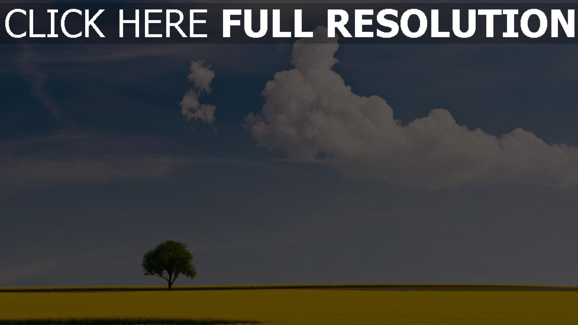 HD Hintergrundbilder rapsfeld gelb blüte himmel blau ...