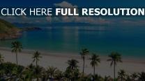 strand palmen meer sand sommer