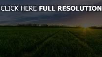 grünen wiese gras horizont strahlen sonne