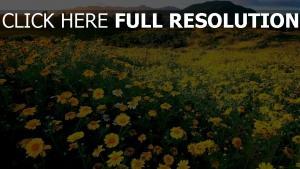 frühling blüte gelbe blumen hügel schöne