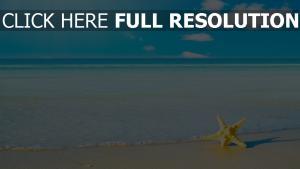 starfish sommer sand meer ufer