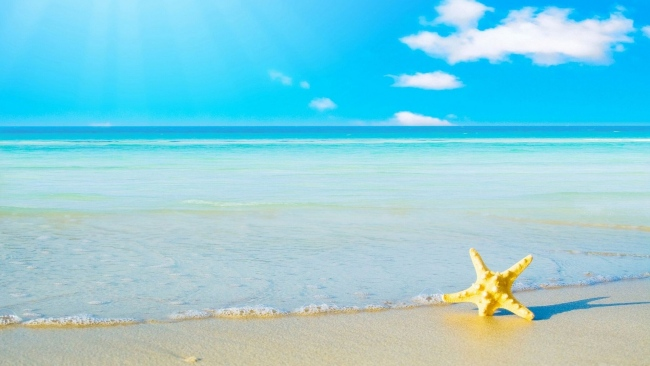 hd hintergrundbilder starfish sommer sand meer ufer desktop hintergrund. Black Bedroom Furniture Sets. Home Design Ideas