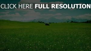 wiese gras ebenen berge sommer harmonie