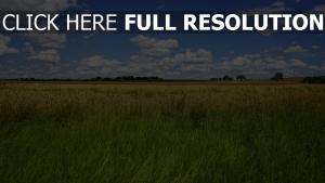 sommer feld gras horizont himmel wolken