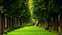 park gasse bäume krone gras rasen