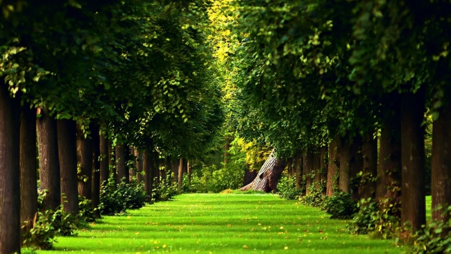 hd hintergrundbilder park gasse bäume krone gras rasen