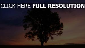 dämmerung sonnenuntergang baum silhouette