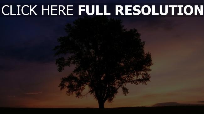 hd hintergrundbilder dämmerung sonnenuntergang baum silhouette
