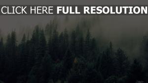 bäume wald nebel wald fichte