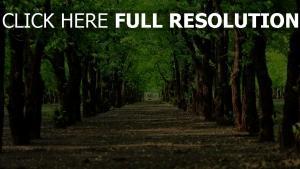 alley bäume parks straßen flach