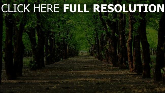 hd hintergrundbilder alley bäume parks straßen flach