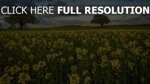 feld frühling gelbe blüten bäume