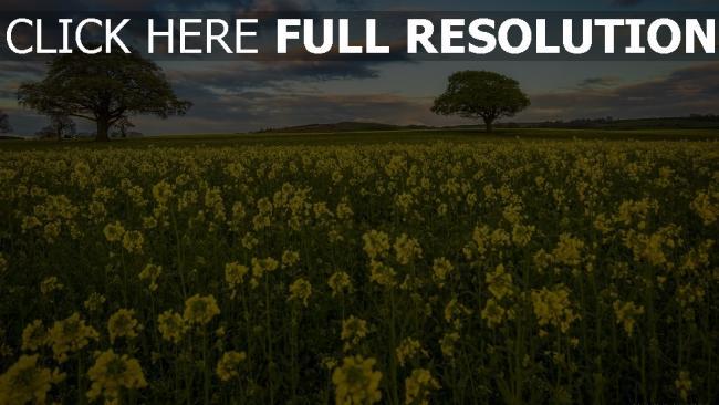 hd hintergrundbilder feld frühling gelbe blüten bäume