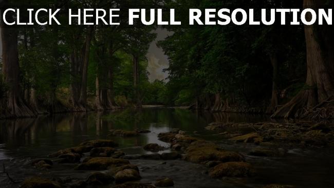 hd hintergrundbilder fluss hain bäume wurzeln steine