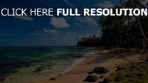 strand tropisch palmen meer wasser himmelblaue