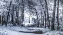 schnee wald bäume frost winter