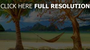 sommerurlaub palmen hängematte meer strand
