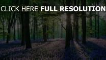 frühling hain bäume blüte lila wiese