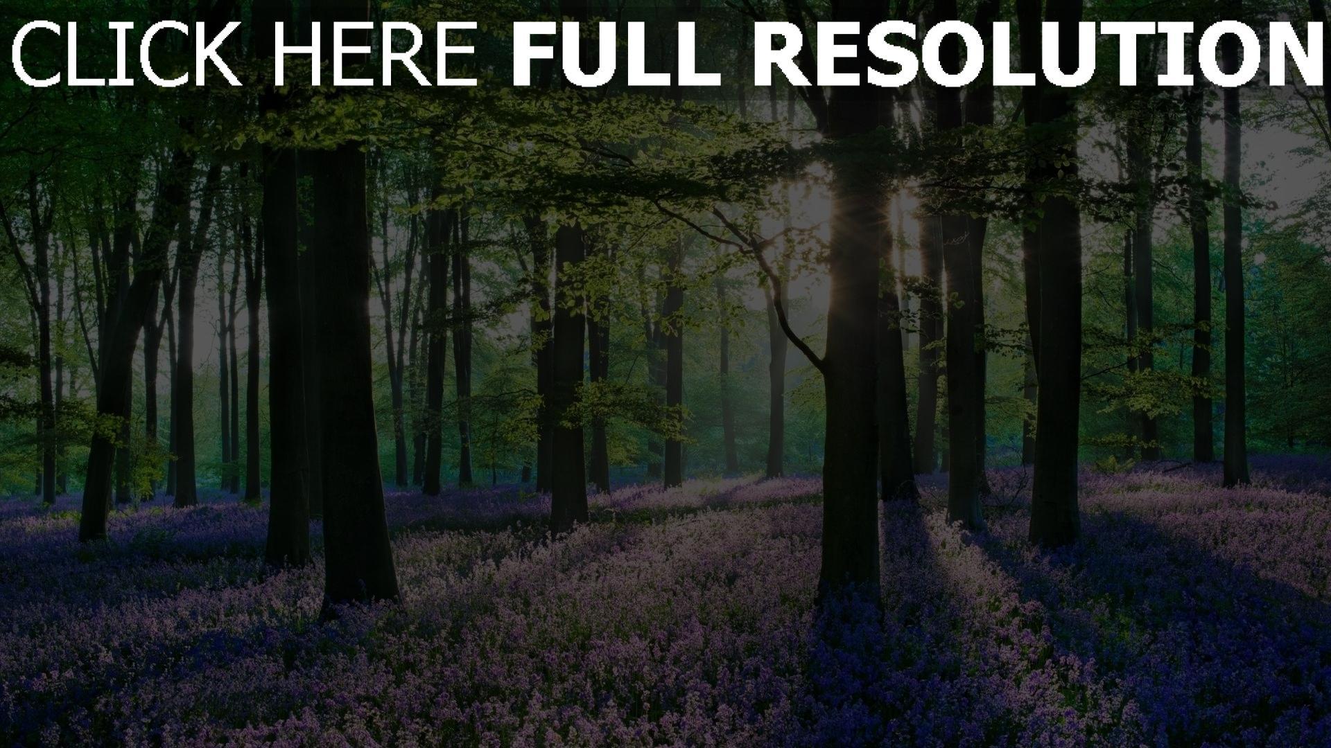 Hd hintergrundbilder fr hling hain b ume bl te lila wiese for Most beautiful wood