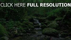 wald strom moosige steine sommer