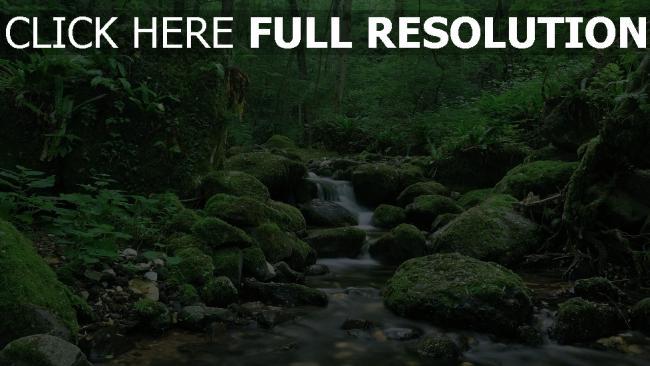 hd hintergrundbilder wald strom moosige steine sommer