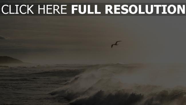 hd hintergrundbilder wellen ozean brandung möwen wasser spritzen