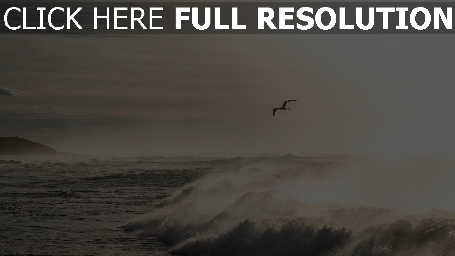 hd hintergrundbilder wellen ozean brandung möwen wasser spritzen 1920x1080