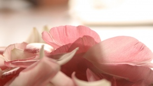 blumenblätter blumen rosa zärtlich romantisch