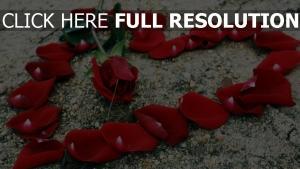 blüten rose blume romanze herz