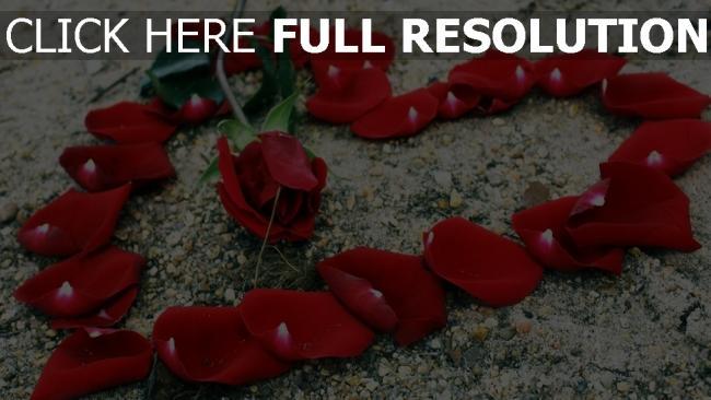 hd hintergrundbilder blüten rose blume romanze herz