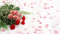 rosen blumenstrauß blumen blumenblätter romantik