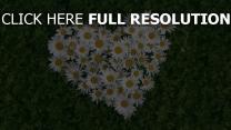 gänseblümchen gras herz kräuter romantik