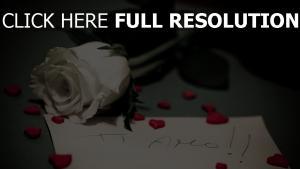 note beichte rose blume romantik