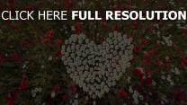 herzen gänseblümchen mohnblumen kräuter romantik