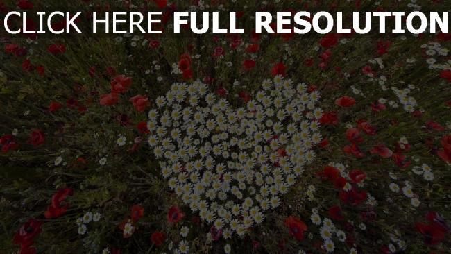 hd hintergrundbilder herzen gänseblümchen mohnblumen kräuter romantik