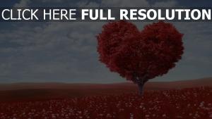 baum herz gras himmel romantik