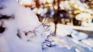 winter schnee zweig bokeh